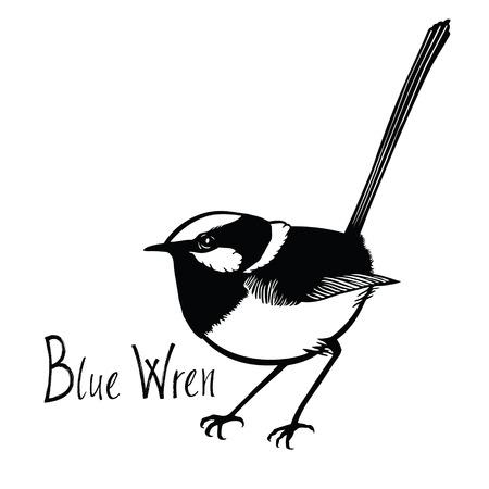 verzameling Vogels Blue Wren Zwart-wit vector Isolated object