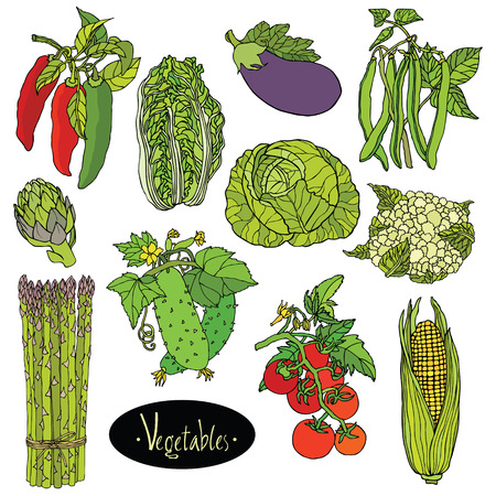 asparagus: Fresh vegetables Vector set Eggplant, cabbage, peppers, beans, tomato, cucumber, asparagus, cauliflower, artichoke, lettuce, corn Illustration