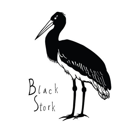wade: Birds collection Black Stork Black and white vector object