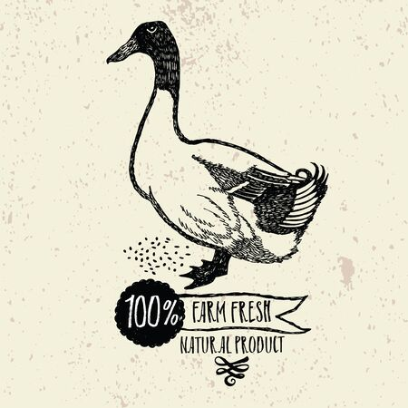 canada goose: Duck Farm Fresh Natural product Vintage background