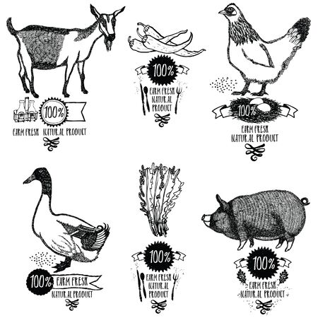 cock duck: Set Farm Fresh Natural product Chicken Goat Duck Pig Isolated object