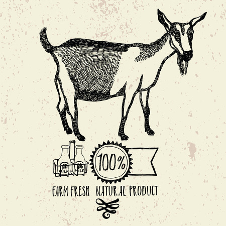 farm fresh: Goat Farm Fresh Natural product Helthy food Illustration