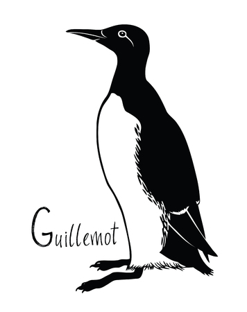 Birds collection Guillemot Black and white vector Wildlife Illustration
