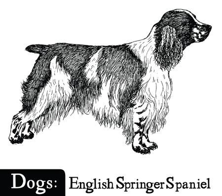 estilo del perro del dibujo boceto Inglés Springer Spaniel Mano