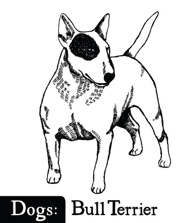 bull terrier: Dog Sketch style Bull Terrier Hand drawing Illustration