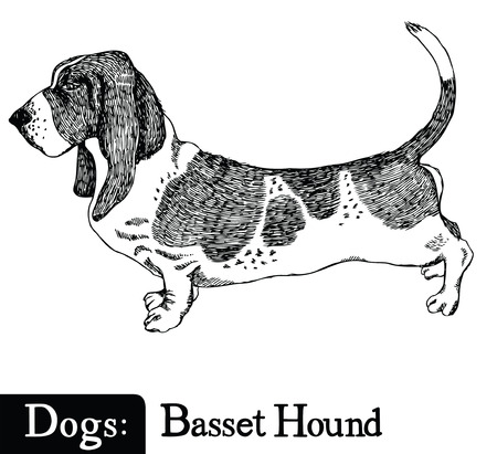 Dogs Sketch style Basset Hound Hand drawing Illustration