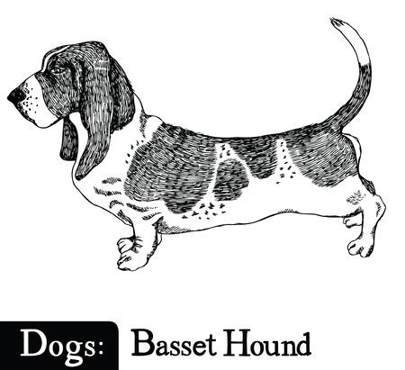 Perros del estilo del bosquejo de dibujo a mano Basset Hound
