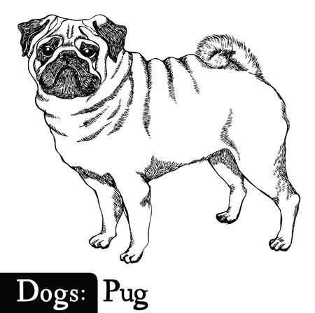 Chiens de style Sketch dessin Pug main
