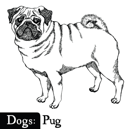 Dogs Sketch style Pug Hand drawing Illustration
