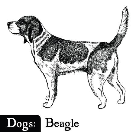 Estilo del perro del bosquejo del dibujo de la mano del beagle Foto de archivo - 57499652