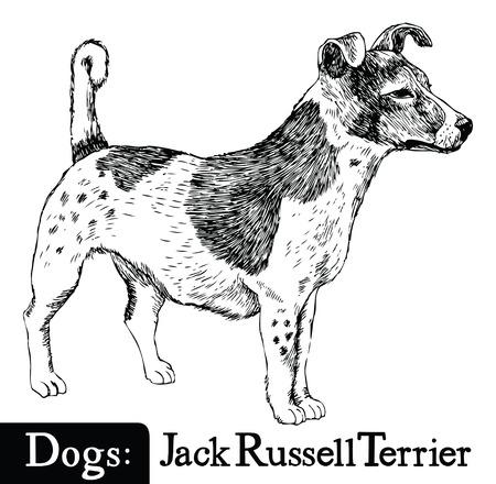 dessin au trait: Style Chien Croquis dessin Jack Russell Terrier main