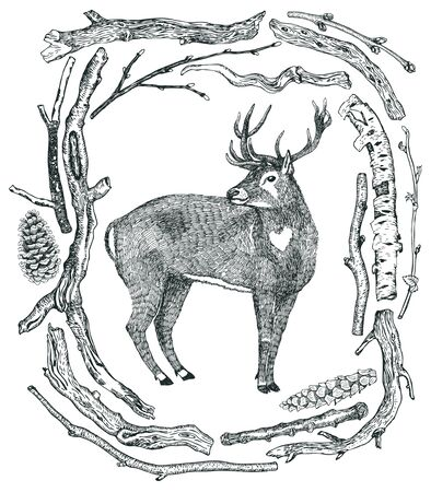 pine boughs: December Deer in a winter forest Frame of Driftwood Wild wild woods Hand drawing