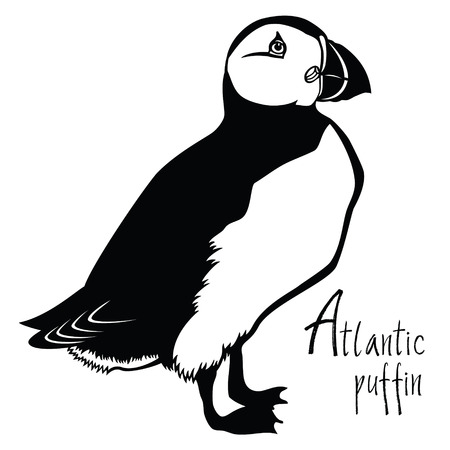 atlantic: Birds collection Atlantic puffin Black and white Vector object