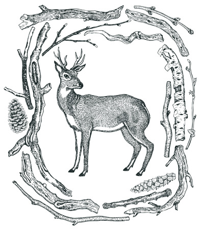 pine boughs: Beautiful Deer Frame of Driftwood Wild wild woods Hand drawing Illustration