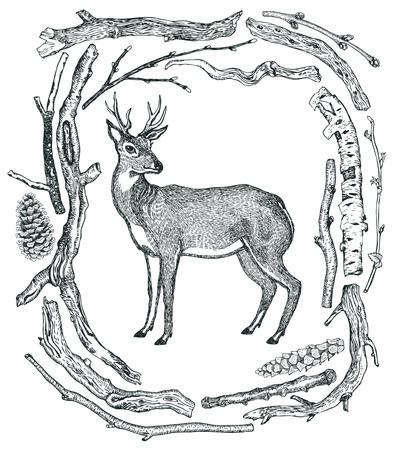 Beautiful Deer Frame of Driftwood Wild wild woods Hand drawing Illustration