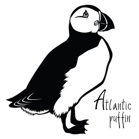 collection Oiseaux Atlantic puffin noir et blanc objet Vector Vecteurs