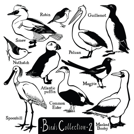 shag: Birds collection Birds silhouettes Vector isolated objects Set Part two