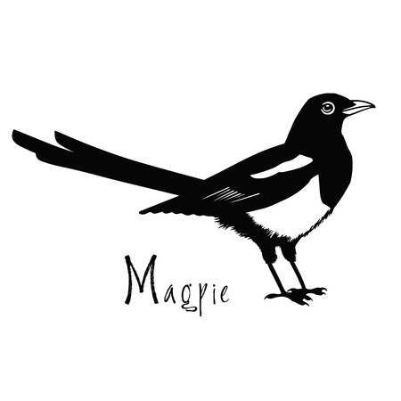 magpie: Birds collection Magpie Black and white Vector object