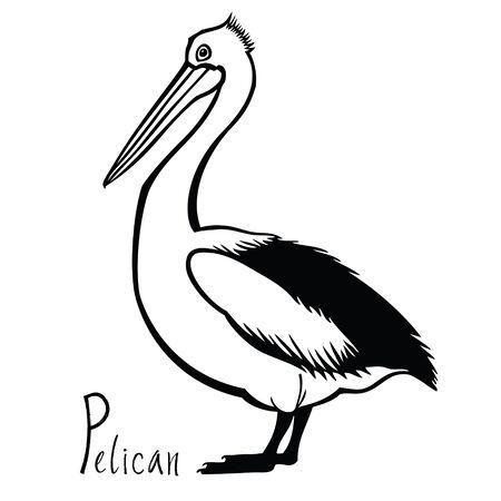 Birds collection Pelican Black and white vector