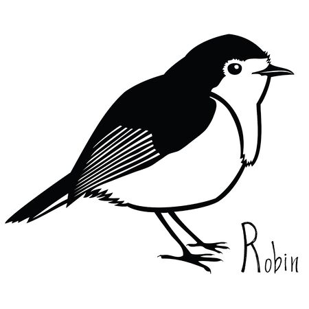 redbreast: Birds collection Robin Black and white Vector object