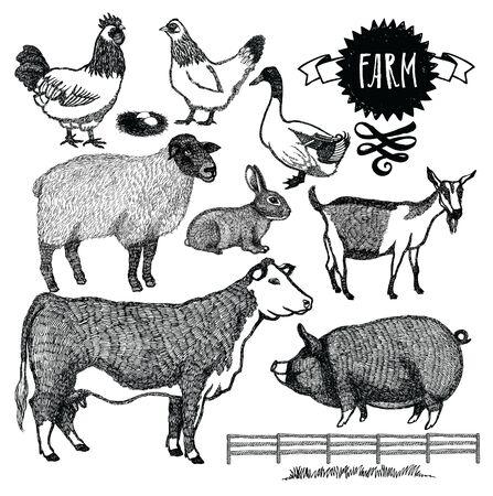 skecth: Organic farm Animals set Isolated Objects