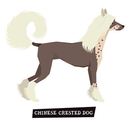 Chinese Crested Dog Geometric style set Illustration