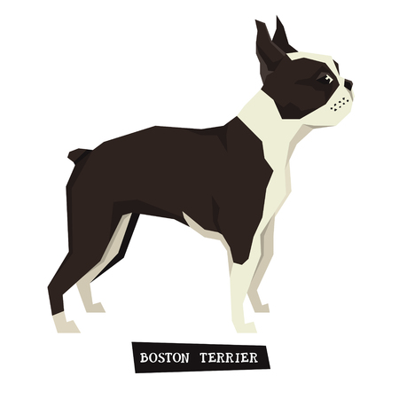 boston terrier: Dog collection Boston Terrier Geometric style set Illustration