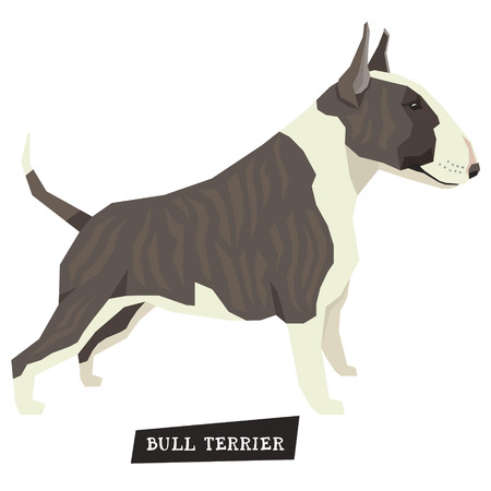 Dog collection Bull Terrier Brindle and White color set Illustration