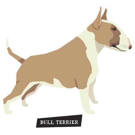 triangular eyes: Dog collection Bull Terrier Fawn and White color set Illustration