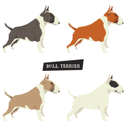 triangular eyes: Dog collection Bull Terrier Set of four object Different color