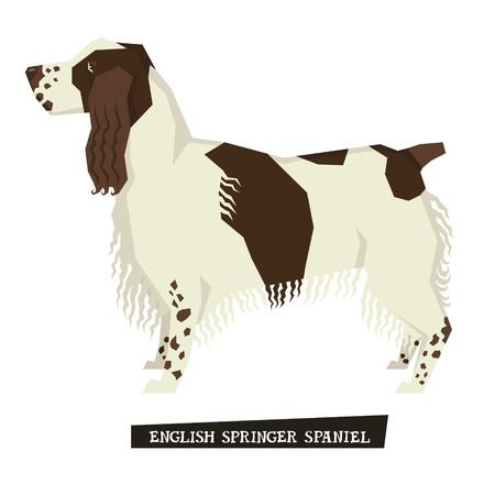 spaniel: Dog collection English Springer Spaniel Geometric style set
