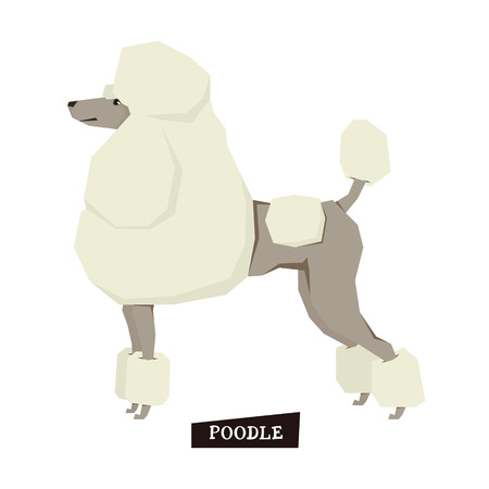 Dog collection Poodle Geometric style set