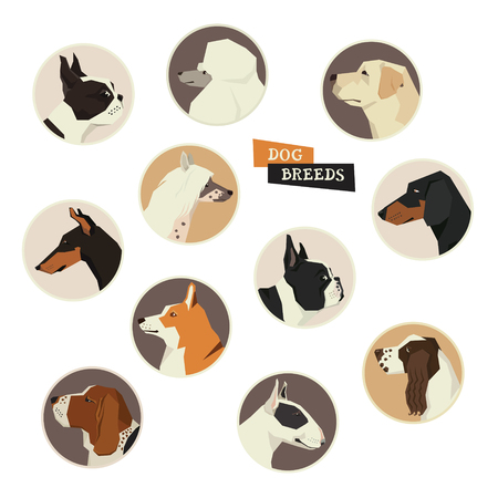 boston bull terrier: Dog collection. Vector set of 11 dog breeds. Modern Geometric style icon round Illustration