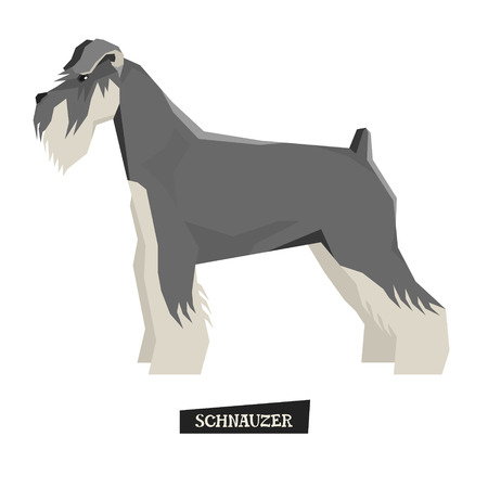 breed: Dog collection Schnauzer Geometric style set