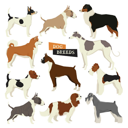 Dog collection. Geometric style. Vector set of 11 dog breeds. Isolated objects Illustration