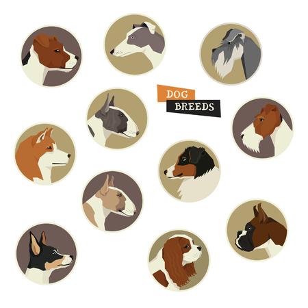 spaniel: Dog collection. Vector set of 11 dog breeds. Geometric style icon round