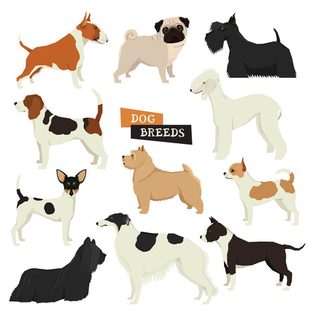 borzoi: Dog collection Vector set of different dog breeds Isolated objects Part three