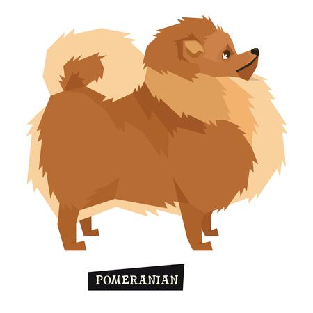 dog: Dog collection Pomeranian Geometric style Isolated