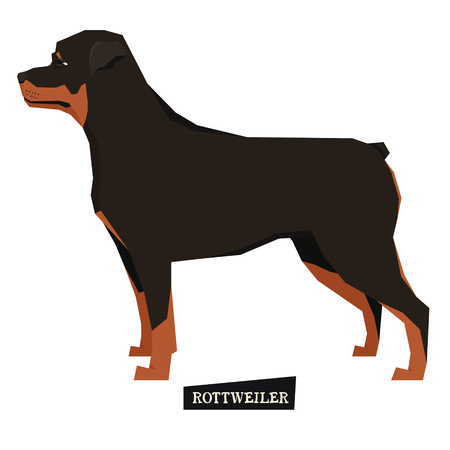 Dog collection Rottweiler Geometric style Isolated Illustration