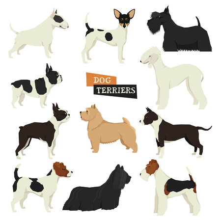 boston bull terrier: Dog collection Terriers Geometric style Set of isolated objects