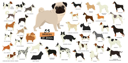 35 different breeds of dogs Isolated objects