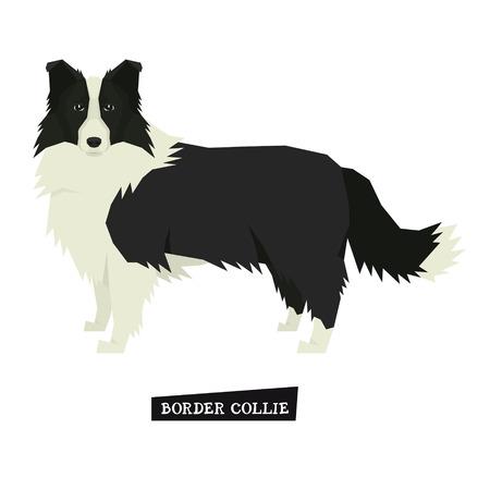 Colección de perros Border Collie Estilo geométrico Conjunto de objetos aislados Ilustración de vector