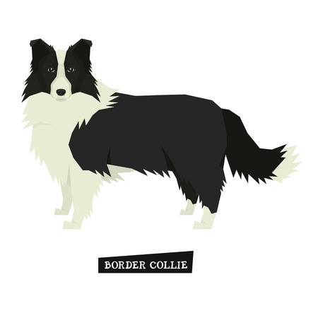 Dog collection Border Collie Geometric style Isolated object set
