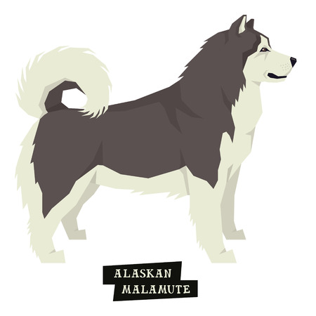 Dog collection Alaskan Malamute Geometric style Isolated object set Illustration