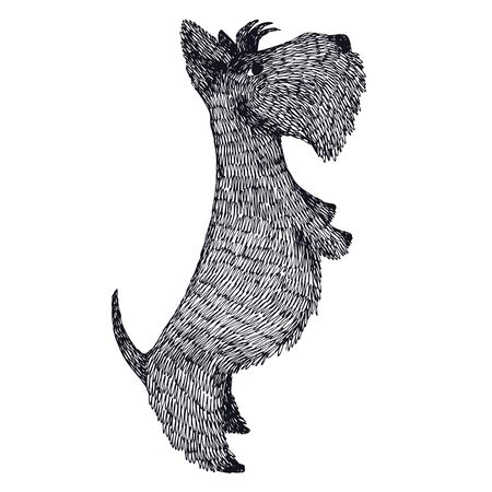 Scottish Terrier Hand drawing Isolated vecotr object