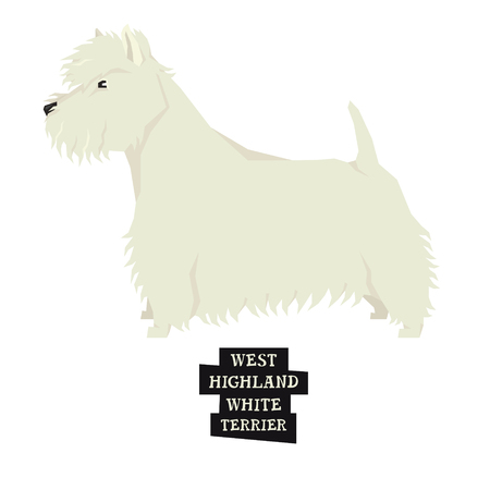 Dog collection West Highland White Terrier Isolated object.