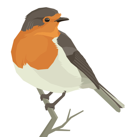 Robin bird illustration.