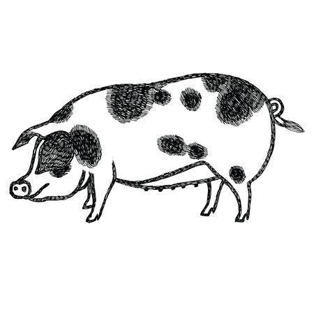 Gloucestershire Old Spots Pig Vector illustration