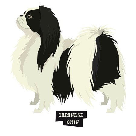 Dog collection Japanese Chin Geometric style Isolated object set