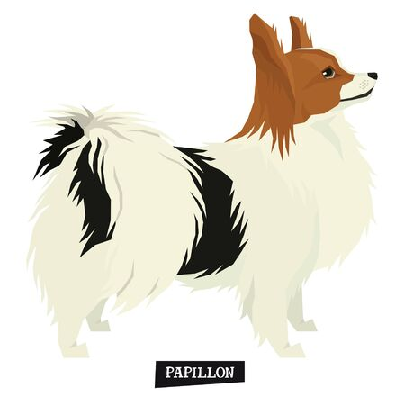 Dog collection Papillon Geometric style Isolated object set